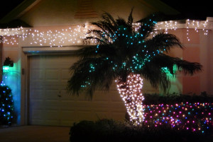 Palm Tree with Christmas lights in Kings Point, Sun City Center