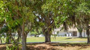 Spanish Moss on trees in Sun City Center, Florida