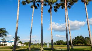 Washingtonia Palm Trees and fountain South Pebble Beach Blvd, Sun City Center, FL