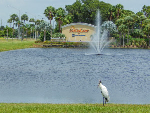 Wood Stork in Sun City Center by Mintos sign off of SR 674 also known as Sun City Center Blvd