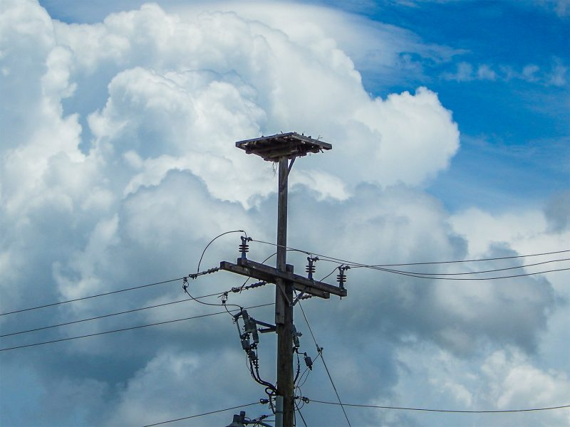 Ospreys (fishing Eagle) nest on platforms on top of telephone utility poles Sun City Center