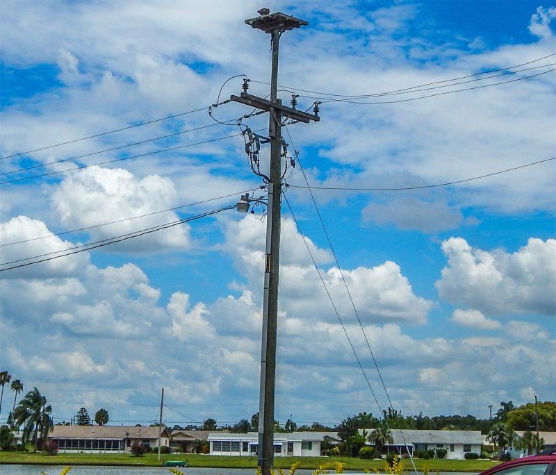 Osprey Sea Hawk on platform on electric pole at Swan Lake in Sun City Center, FL
