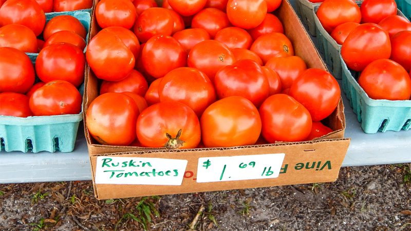 Ruskin Tomato prices in Sun City Center Florida June 2014