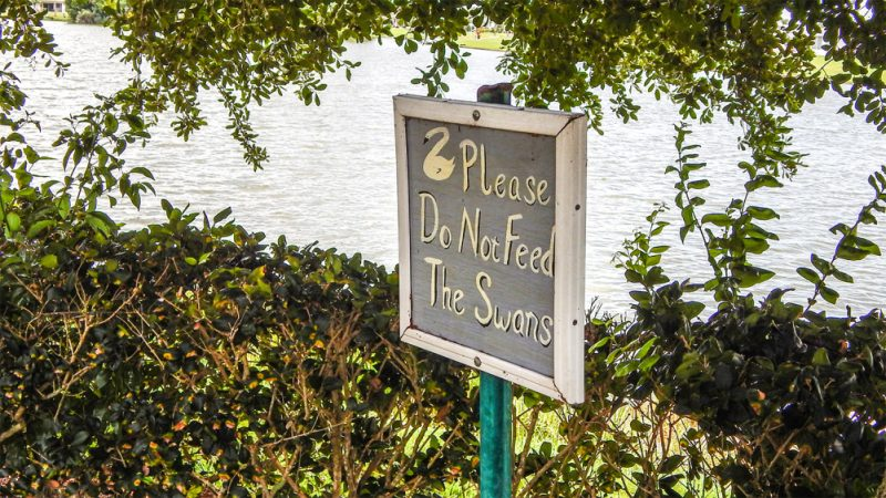 Sign along the banks of Swan Lake in Sun City Center that reads 'Please Do Not Feed The Swans'
