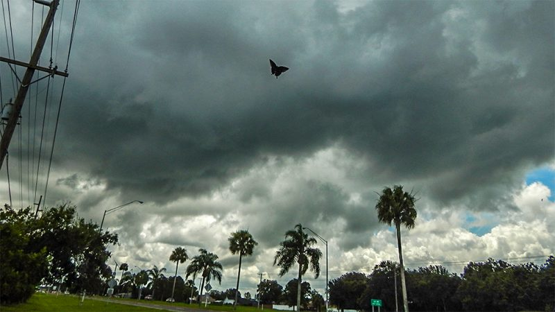 Cloud cover with butterfly or moth flying in the image in Sun City Center, FL