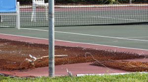 July 26, 2014 - tearing down old fence for new fence at tennis courts at North Course Complex in Kings Point, Sun City Center, FL