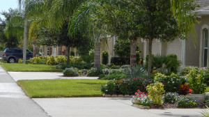 Aug 7, 2014 - Front lawns in Kings Point in care of Mainscape landscaping company