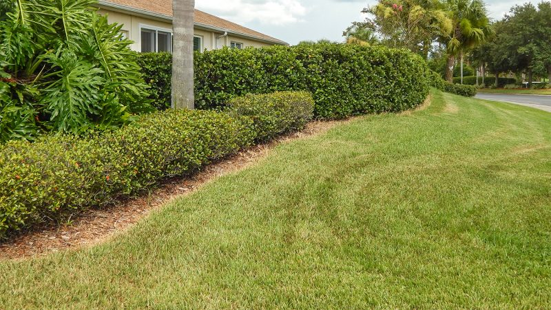 Mainscape beautifies landscape in kings point sun city for Grass bushes landscaping