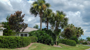 Aug 7, 2014 - Landscaping maintained by Mainscape in Kings Point, Sud City Center, FL