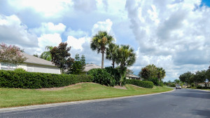 Aug 7, 2014 - Plants and lawns maintained by Mainscape in Kings Point