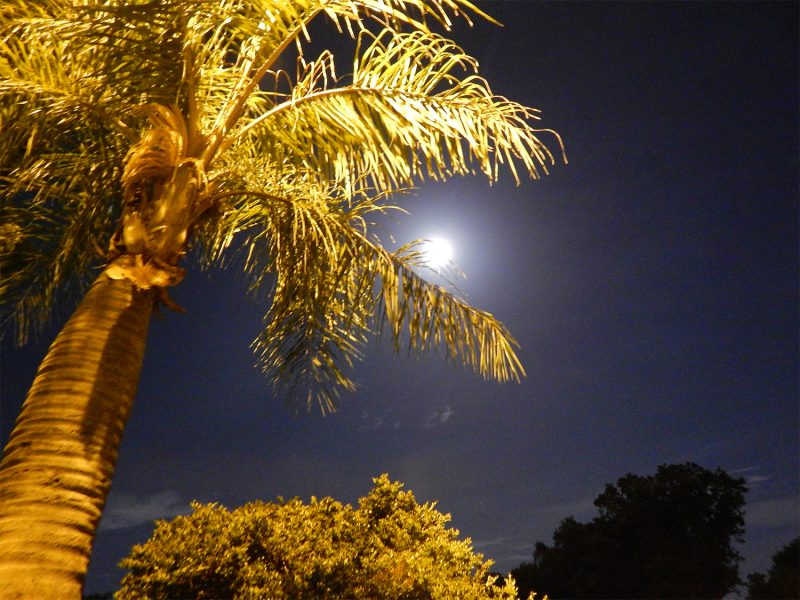 Aug 10, 2014 -Supermoon, Sun City Center, FL